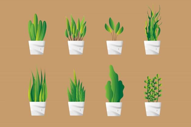 Set di vaso di piante verdi nel piatto
