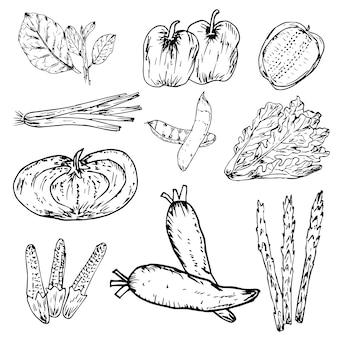 Set di verdure disegnate a mano, erbe e spezie biologiche, set di disegni di cibo sano.