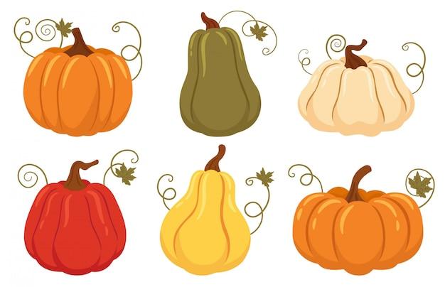 Set di zucche, colori autunnali, diversi tipi di zucche