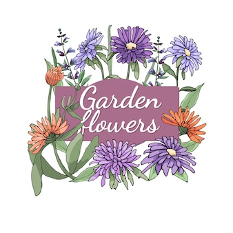 Set floreale l'estate e la molla hanno isolato i fiori e le erbe del giardino con l'aster, il tagete, la salvia.