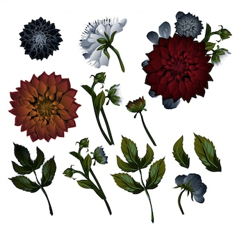 Set floreale vintage. dalie. set di decorazioni floreali.