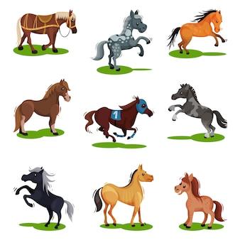 Set piatto di cavalli in varie pose. animali zoccoli isolati. creature di mammiferi su erba verde