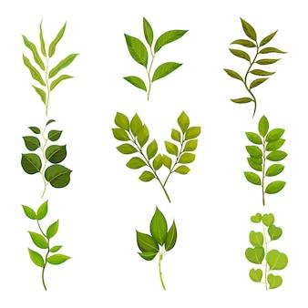 Set piatto di rami con foglie verdi. ramoscelli con fogliame fresco. tema natura e flora