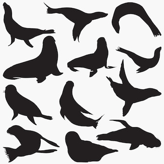 Set sagome di foca