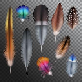 Set trasparente realistico di piume