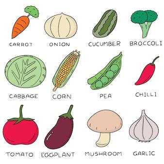 Set vettoriale di verdura