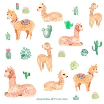 Sfondo carino alpaca dell'acquerello