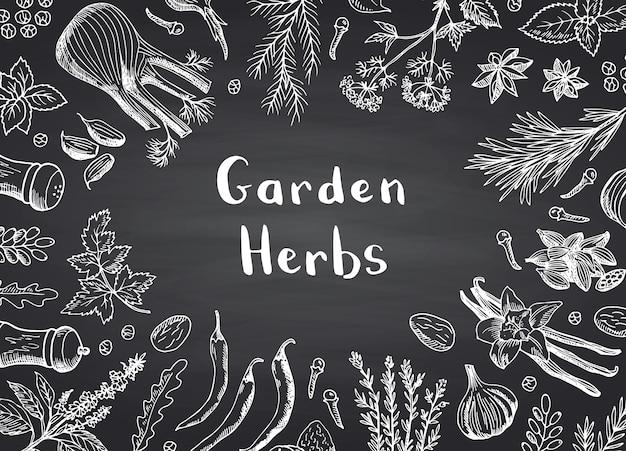 Sfondo cornice di erbe e spezie disegnati a mano