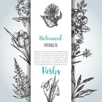 Sfondo di erbe e fiori selvatici