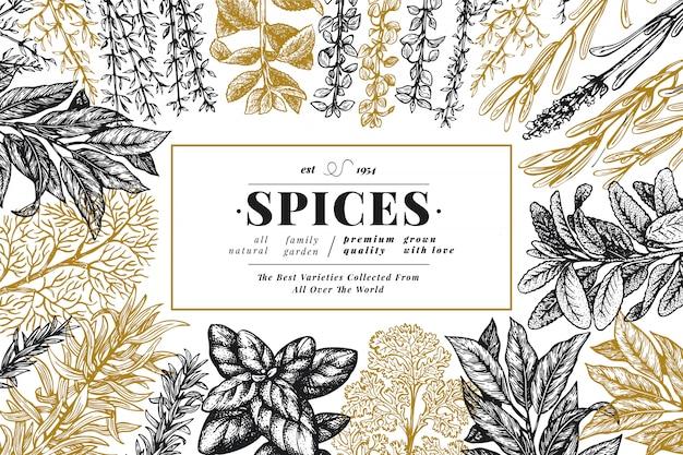 Sfondo di erbe e spezie culinaria. retro illustrazione botanica disegnata a mano.