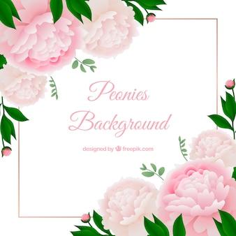 Sfondo di fiori con peonie