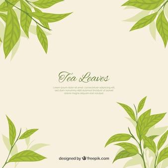 Sfondo di foglie di tè naturale con design piatto