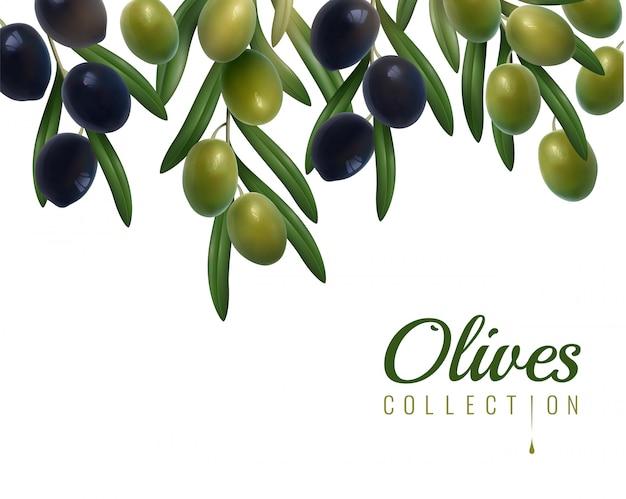 Sfondo di olive realistiche