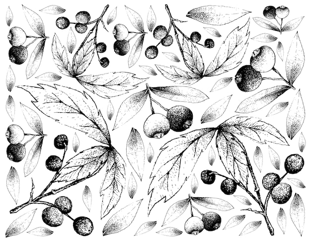 Sfondo di skecth di allophylus edulis e brush cherries