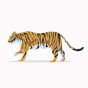 Sfondo di tigre a piedi