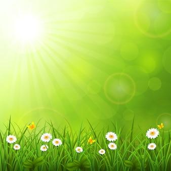 Sfondo estate con erba
