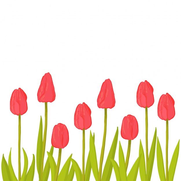 Sfondo floreale con tulipani rossi