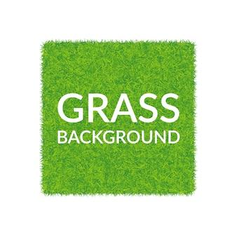 Sfondo quadrato di erba verde.