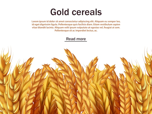 Sfondo realistico di cereali con modello di testo. spighe di segale, grano, orzo
