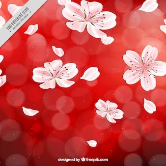 Sfondo rosso con fiori di ciliegio e l'effetto bokeh
