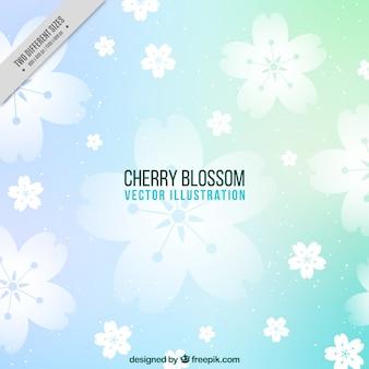 Sfondo sfocato di fiori di ciliegio