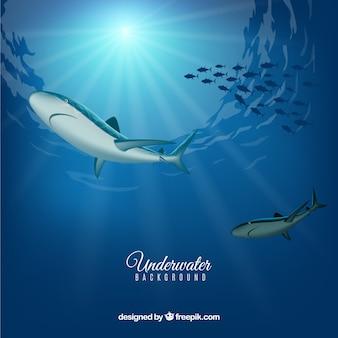 Sfondo subacqueo con gli squali in stile realistico