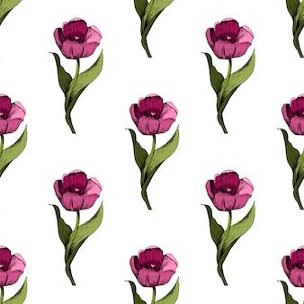 Sfondo trasparente con tulipani rosa colorati