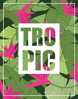 Sfondo tropicale con scritte