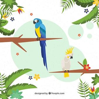 Sfondo tropicale con uccelli e piante