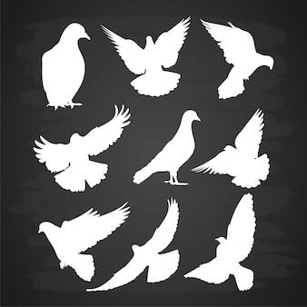 Siluetta della colomba bianca messa sulla lavagna