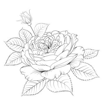 Siluetta della rosa isolata sopra bianco.
