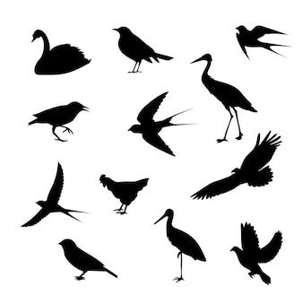Siluette differenti delle icone degli uccelli isolate