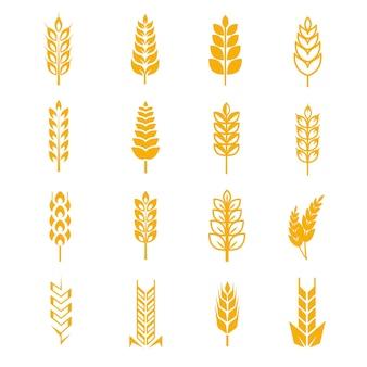 Simboli vettoriali di grano orecchie pane
