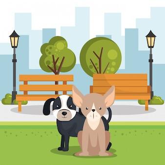 Simpatici cani nella scena del parco