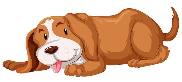 Simpatico cane con pelliccia marrone