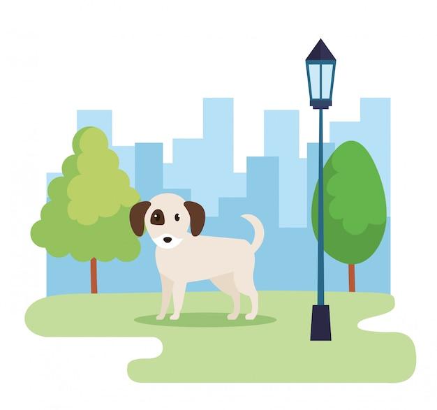Simpatico cane nel parco
