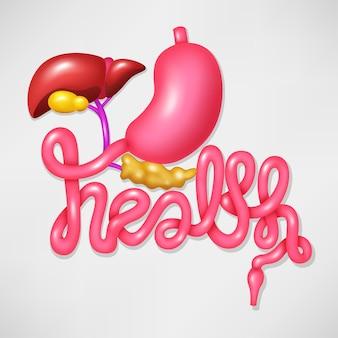 Sistema di digestione umano di simbolo di campagna di salute