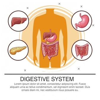 Sistema digestivo infografica con informazioni