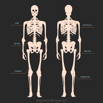 Skeleton illustrazione