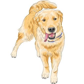 Sorridere felice labrador retriever della razza del cane di schizzo