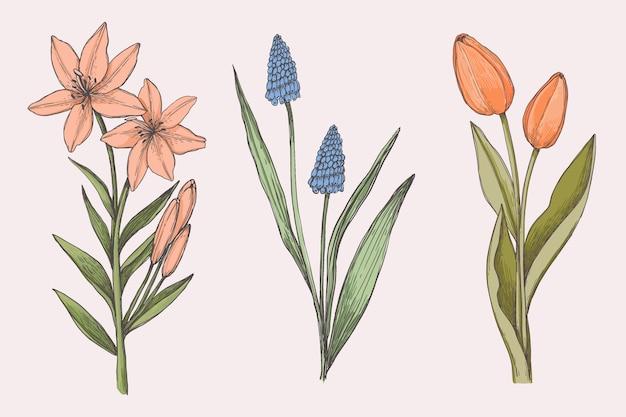 Sorteggio collezione di fiori botanica vintage