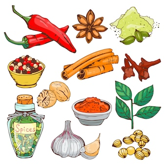 Spezie condimento disegnati a mano stile erbe aromatiche elementi e semi ingrediente ingrediente cucina boccioli di fiori foglie vegetali vegetali sani ortaggi biologici.