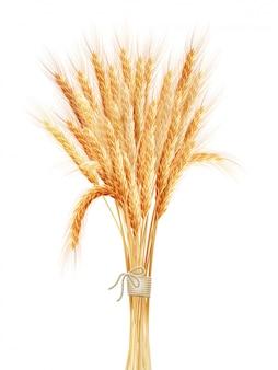 Spighe di grano isolate su sfondo bianco.
