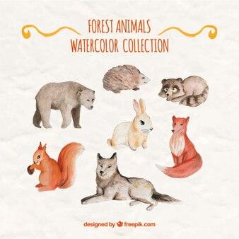 Splendidi animali della foresta acquerello