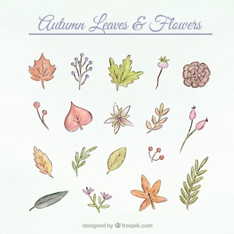 Splendidi fiori e foglie di raccolta