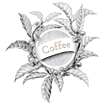 Stile d'annata di logo dell'illustrazione dell'incisione del disegno della mano della struttura del caffè