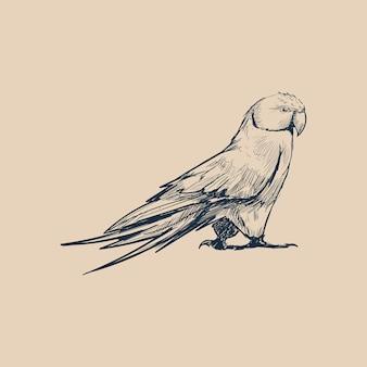 Stile di disegno dell'illustrazione del pappagallo