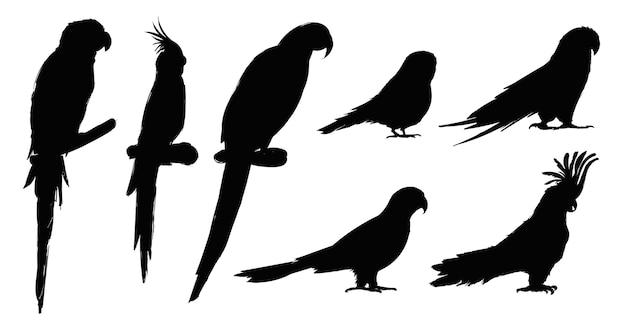 Stile di disegno illustrazione della collezione di uccelli pappagallo