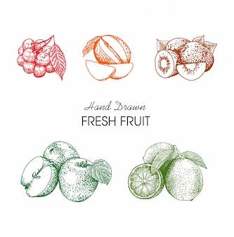 Stile disegnato a mano di frutta illustrazione