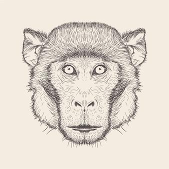 Stile disegnato della scimmia illustrazione a disposizione